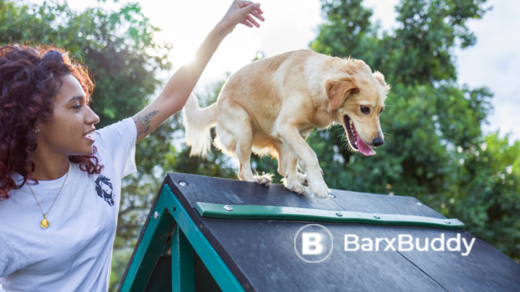 Why Even Pros are Using BarxBuddy to Train Their Dogs